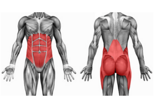 Read more about the article MOTION IN THE CENTRE OF THE BODY HAS TO BE EFFICIENT